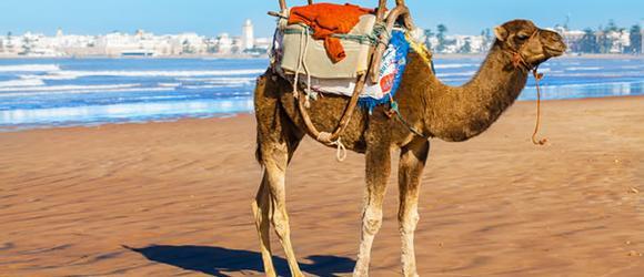 Hotel a Essaouira